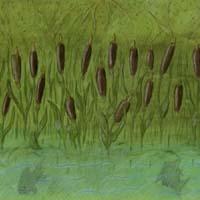 Hintergrundbild Teichufer mit Rohrkolben