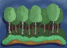 Birken Baumreihe als Hintergrundbild